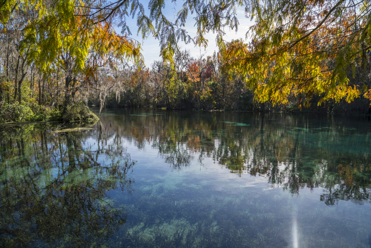 Fall In Love with Ocala, Fl this Fall